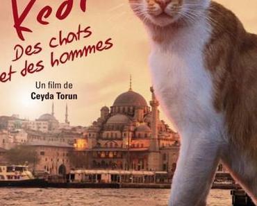 Kedi – Des chats et des hommes de Ceyda Torun