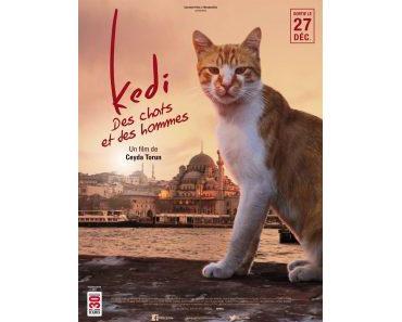 Kedi – Des chats et des hommes